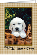 Happy Mother's Day Puppy in a basket card