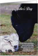 Mother's Day Card With Spring Cow And Calf - Special Mother card