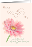Great Grandmother Happy Mother's Day Pink Gerbera Daisy on Shell Pink card