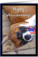 Happy Anniversary Boxer dog card