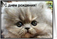 Russian Happy Birthday Gray Persian Kitten card