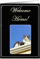 Welcome home from cat card
