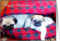 Happy Anniversary Pugs card