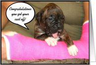 Congratulations on getting your cast off Boxer puppy card