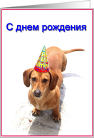 Russian Happy Birthday Dachshund card