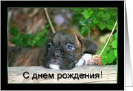Russian Happy Birthday Brindle boxer puppy card