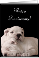 Happy Anniversary Bulldog puppies card