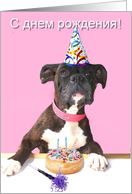Russian Happy Birthday Boxer Dog card