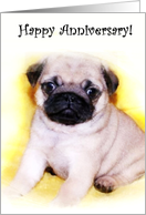 Happy Anniversary Pug Puppy card