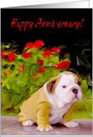 Happy Anniversary Bulldog puppy card