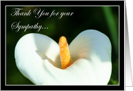 Thank You for your sympathy Calla Lily card
