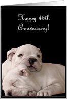 Happy 46th Anniversary, Bulldog Puppies card