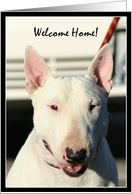 Welcome home,English Bull Terrier card