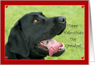 Happy Valentine's Day Grandpa Labrador Retriever card