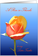 Latin Teacher Rose in Thanks card