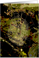Welcome Web, Close-Knit Group card