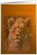 Thinking of You- Lion card