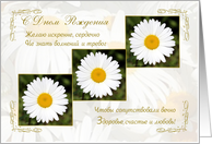 Russian Birthday card with white daisy flowers card