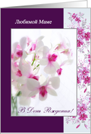 Russian Birthday card for Mom - white pink Orchids card