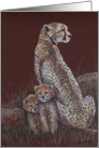 Cheetah Family Birthday Card