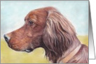 Irish Setter Birthday Card