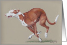 Ibizan Hound Birthday Card