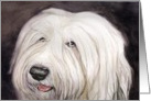 Old English Sheepdog Birthday Card