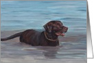 Chocolate Labrador Retriever Birthday Card