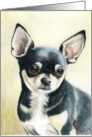 Birthday Chihuahua card