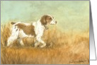 Birthday Brittany Spaniel card