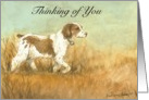 Thinking of You Brittany Spaniel card