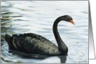 Birthday Black Swan card