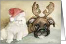 Christmas Boxer and Persian Cat card