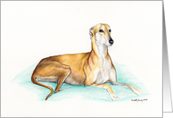 Adoption Greyhound card
