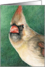 Female Cardinal Christmas Card