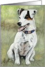 Jack Russel Birthday Card