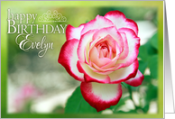 Happy Birthday, Evelyn- Pretty Rose in Garden card