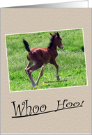 whoo Hoo, Birth Announcement Horse card