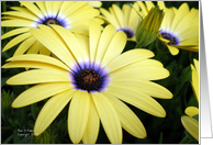 Daisies Scriptural Encouragement card