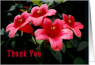Thank you, Neighbor Red Flowers card