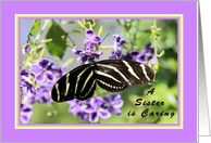 Birthday for Little Sister with Zebra Wing Butterfly card