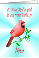 Nana Birthday - Cardinal card