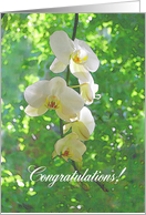 White Orchids Wedding Congratulations card