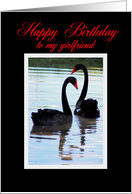 Happy Birthday to my Girlfriend Black Swans card