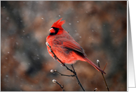 Cardinal in a Snowstorm card