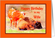 Longhorn and Buffalo, Wife Happy Birthday card