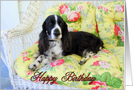 Happy Birthday English Cocker Spaniel on Chair card
