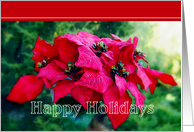 Poinsettia Happy Holidays Business card