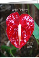 Happy Birthday to Wife, Anthurium Lily Flower card