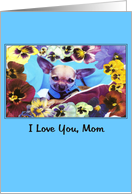 funny flowers chihuahua dog mothers day card